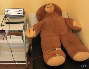 Teddy bei der Körperfettmessung