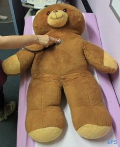Teddy bei der körperlichen Untersuchung