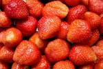 Erdbeeren - Frisch gepflückt schmecken sie auch ohne Zucker